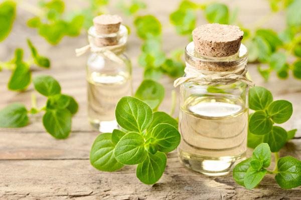 oreganový olej účinky