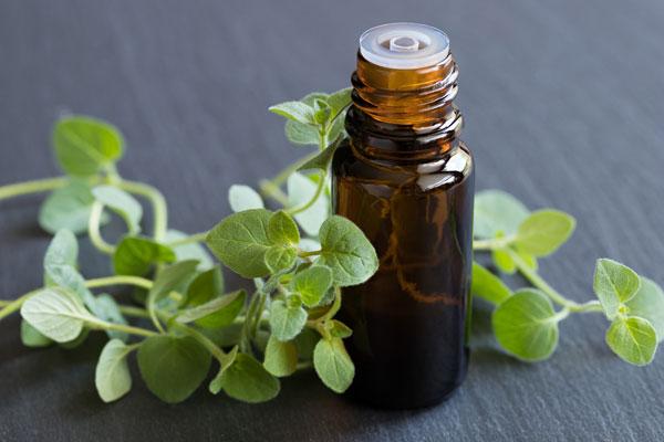 oreganový olej užívanie