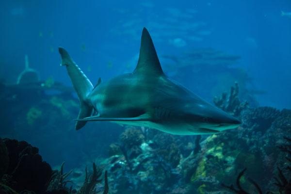 žraločia chrupavka účinky