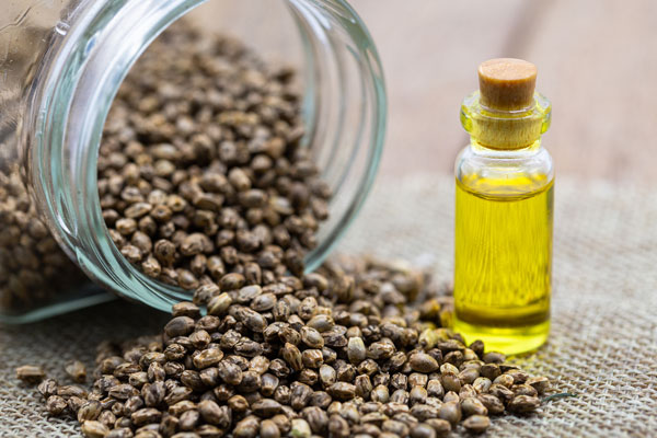 konopné semienka účinky