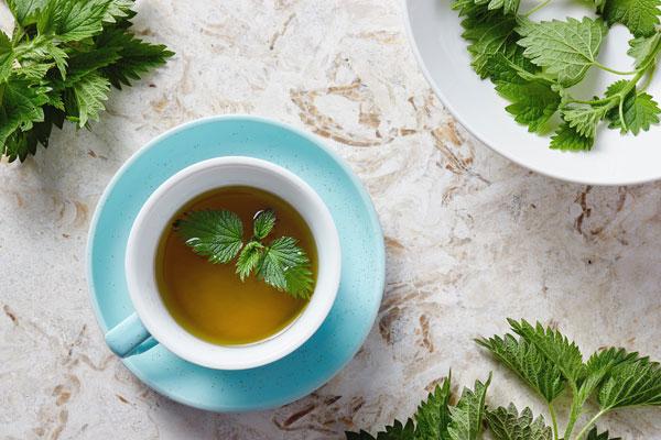 žihľavový čaj užívanie