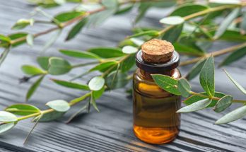 eukalyptový olej